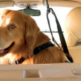 Beware the Hazards Lurking in Your Car