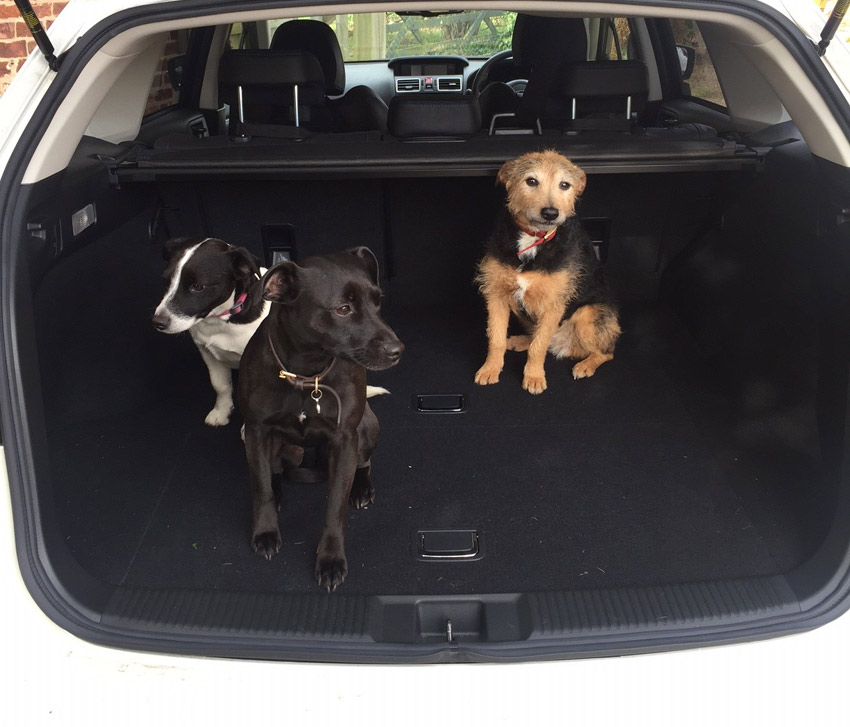 Fly and some friends checking out the Subaru Levorg