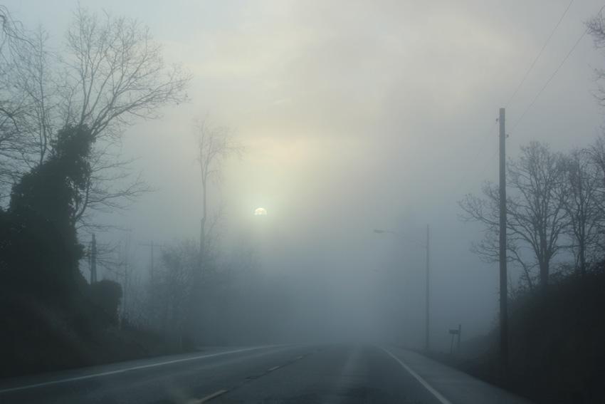 fog_main